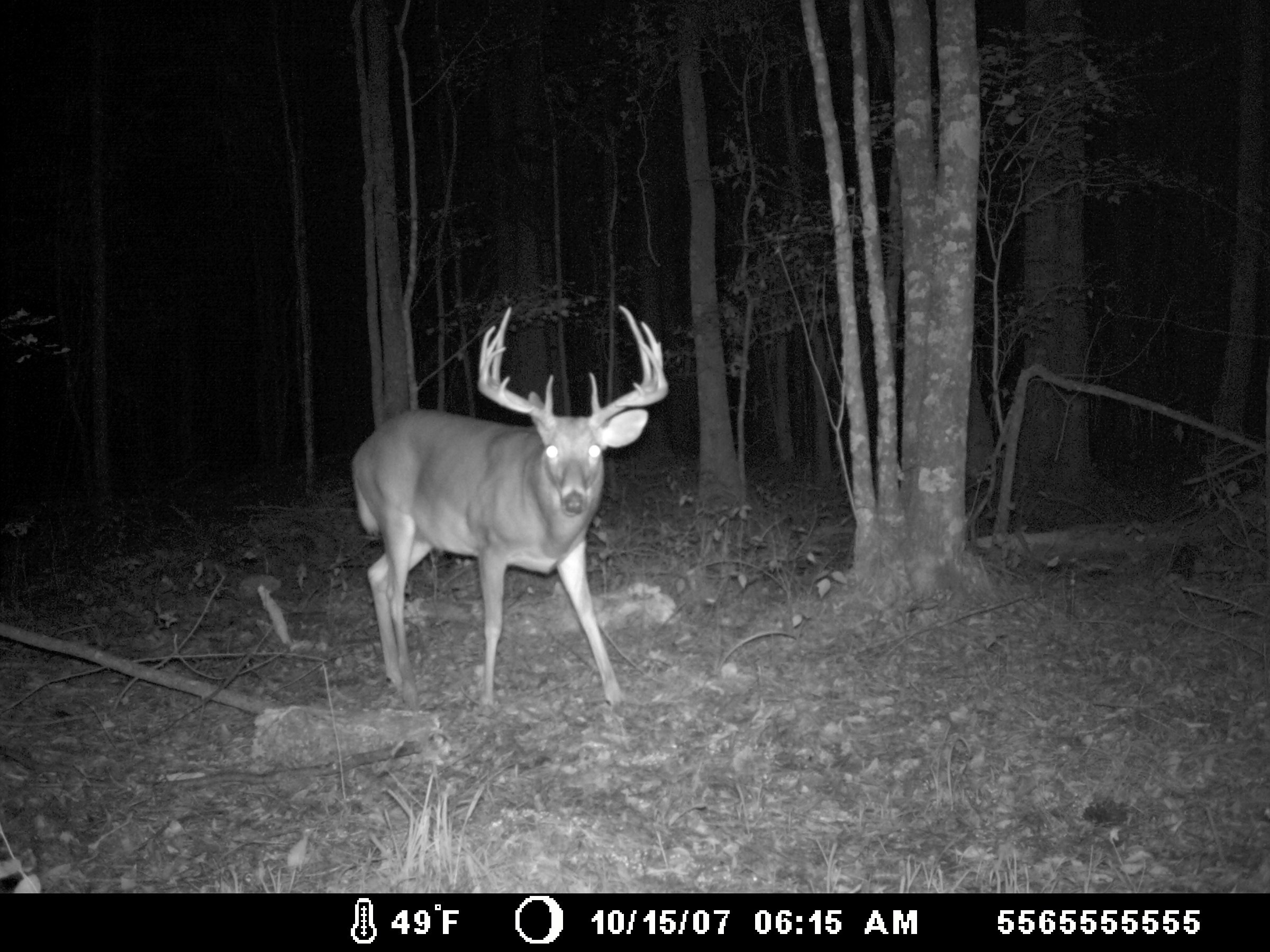 Best Trail Cameras 2019 - Reviews And Buyer's Guide ...